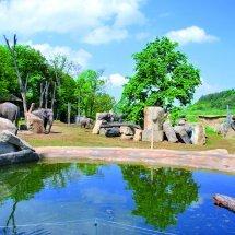Zoo Praha - sloninec