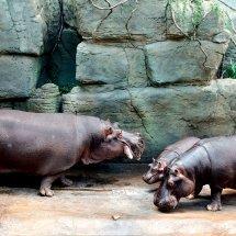 Zoo Praha - hrošinec