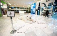 Polární medvěd