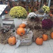 Podzim ve Spektru v Průhonicích (1)